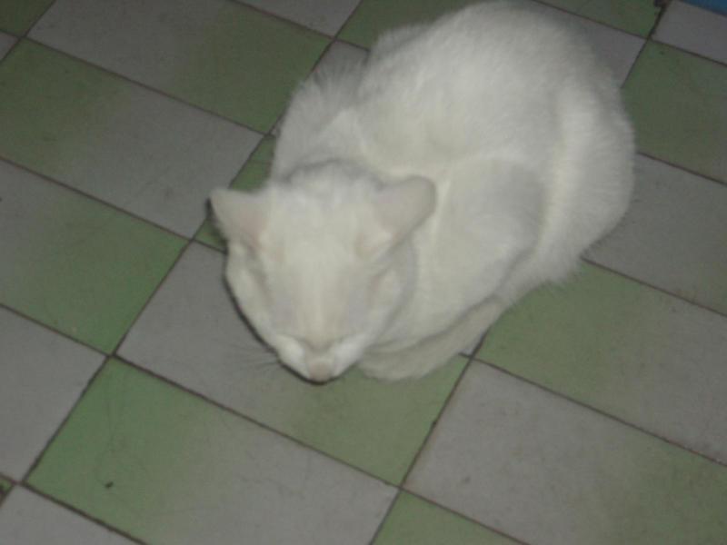 一只名叫小白兔的小白猫和它的太监猫老大--好象有点拗口哦