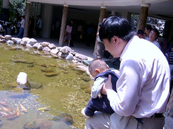 小学生观察小动物的日记七篇五十字问:小学生观察小动物的日记七篇五