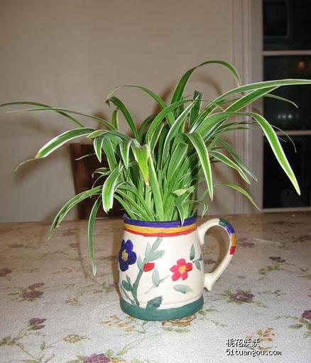 看我diy的花盆