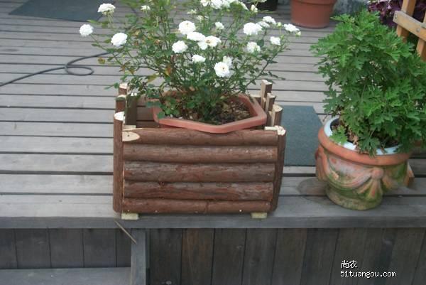 衫木原木桩(不是衫木板)一根根立着排或横着排