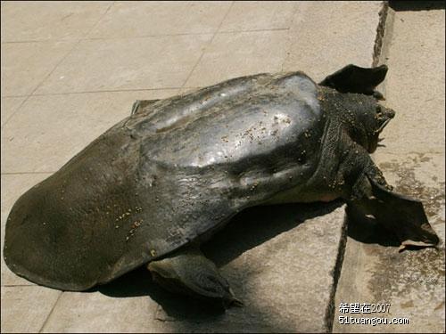 询问 小乌龟怎么样冬眠