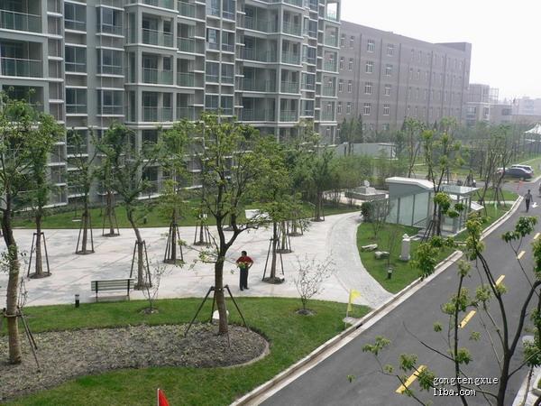 """另一边的广场,看到那些树了没,那是""""树阵景观"""".prism死亡率绘制图图片"""