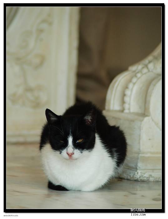 买工艺品店铺里的猫猫,我老公说它好阴