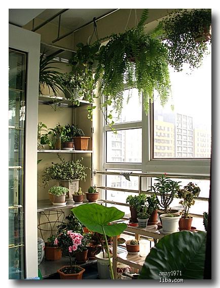 阳台小花园图片