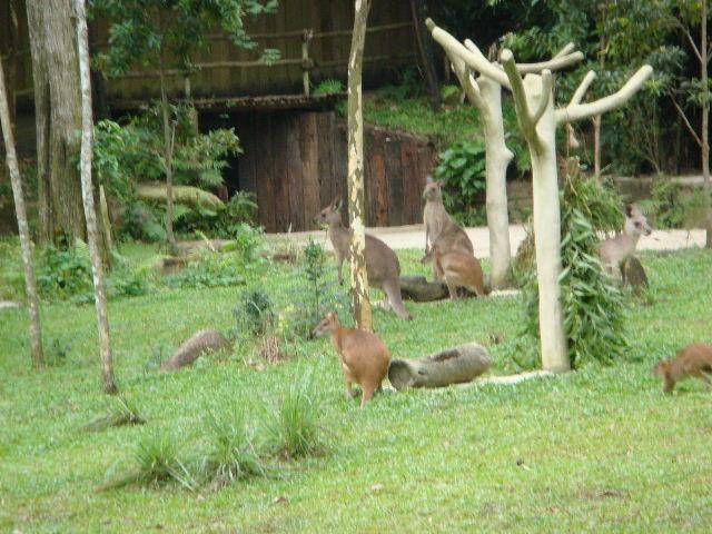 意外的新加坡之旅——隆重推荐新加坡动物园,太灵了,一定要去!