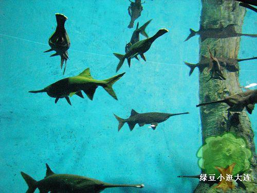 海洋动物看图写话