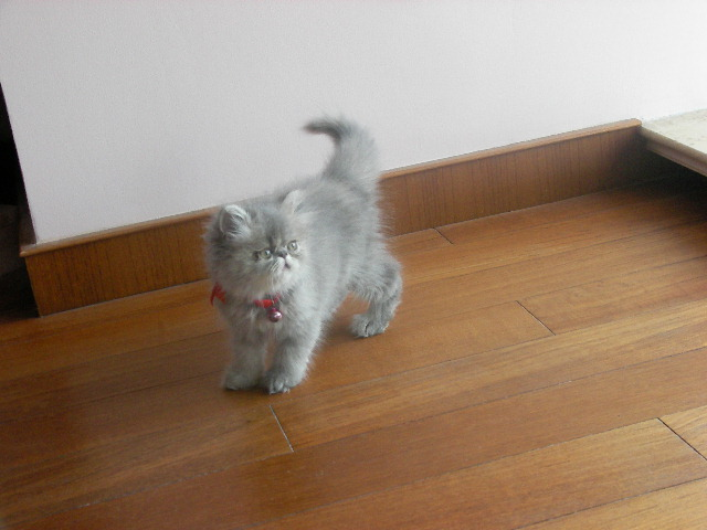 超级可爱小加菲猫~~小宝贝长大咯