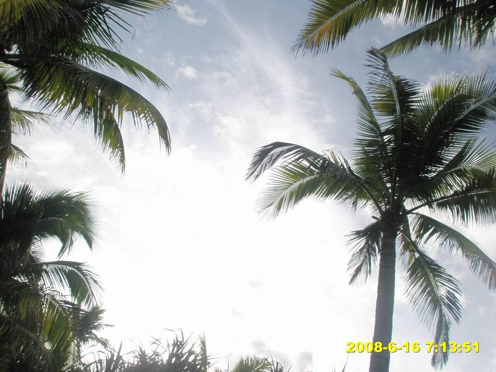 躺在吊床上拍的椰子树