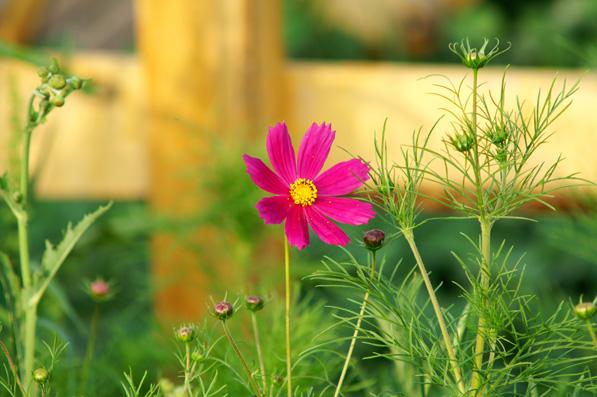 时光雕刻的花朵