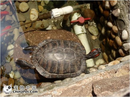 家里养乌龟的tx进来--春天来啦