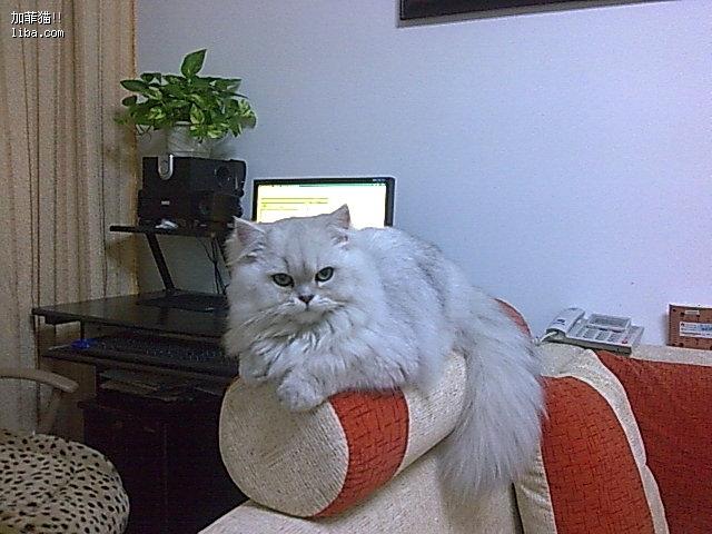 2008-11-25 11:03        最初由         的  加菲猫!
