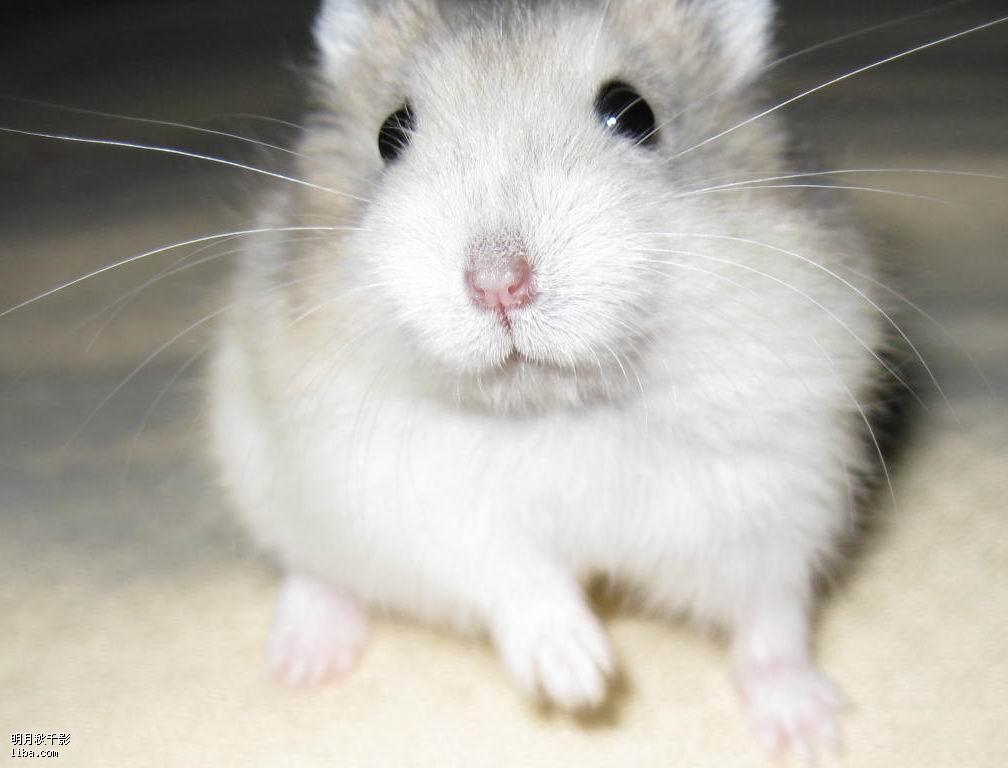 小仓鼠们全部有了自己的新家,但愿他们能在新家快乐成长 有图 另 养