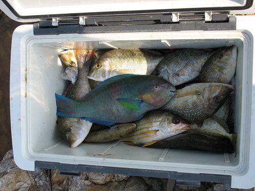 梦见鱼在冰箱里有味