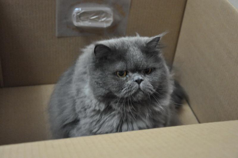 壁纸 动物 猫 猫咪 小猫 桌面 800_531