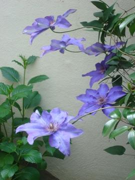 鲜花名称-这花叫什么名字