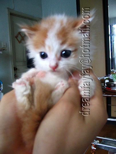 壁纸 动物 猫 猫咪 小猫 桌面 405_540 竖版 竖屏 手机