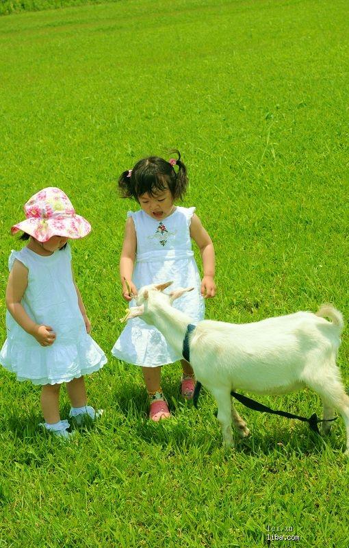 梦见自己喂羊吃草