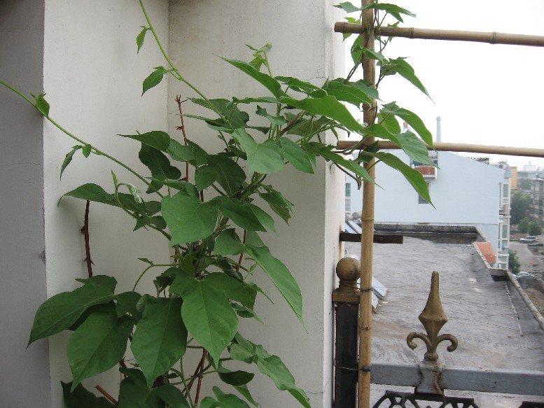 我的楼顶小花园