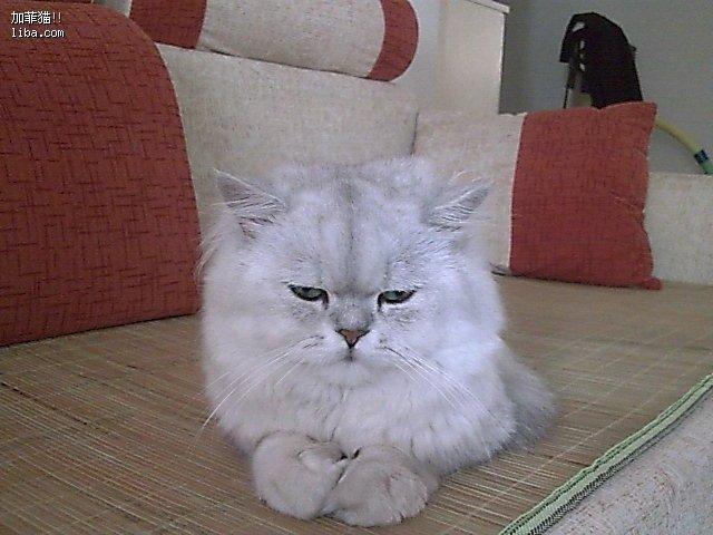 图片捂嘴偷笑表情搞猫咪王者恶荣耀表情包图片
