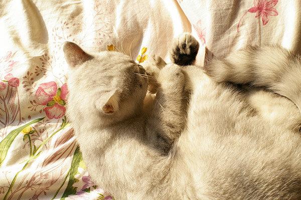 两只猫可爱合照