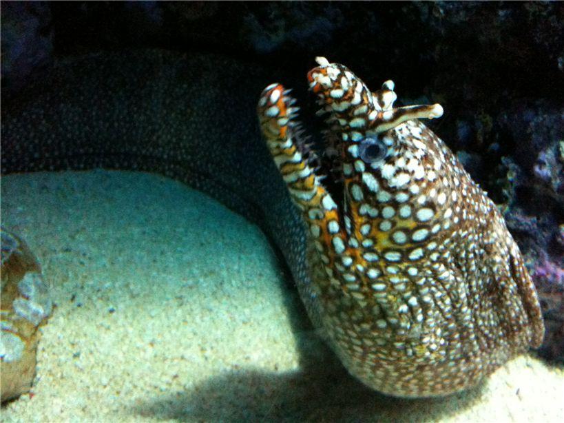 壁纸 动物 海底 海底世界 海洋馆 水族馆 鱼 鱼类 819_614