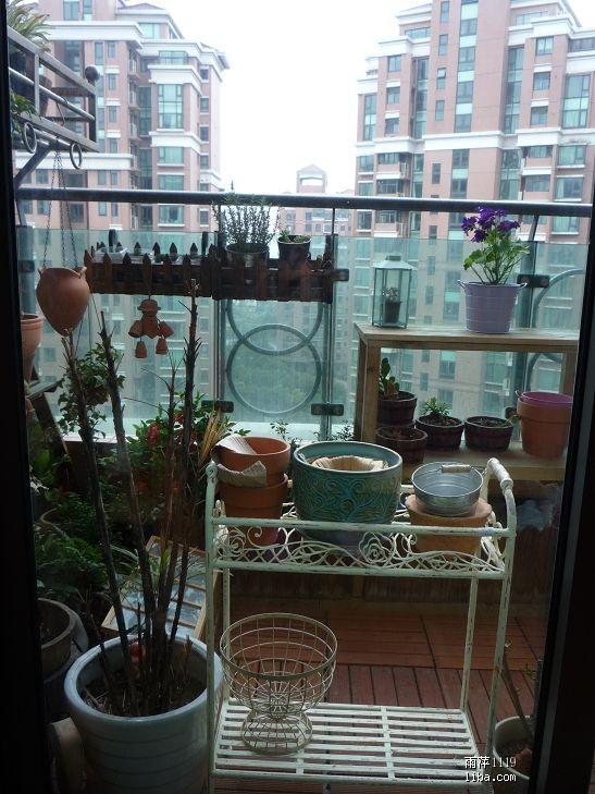 水泥丛林里的优雅绿生活 小阳台也疯狂 P50 51肉肉花,玉簪花,栀子花,苹果色矮牛