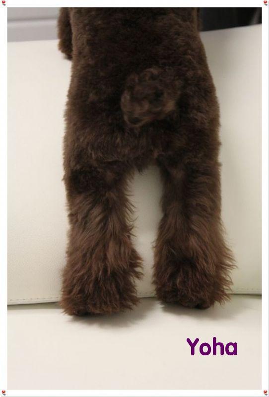 中年熊头像背影