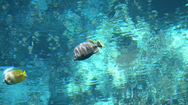 壁纸 海底 海底世界 海洋馆 水族馆 800_450