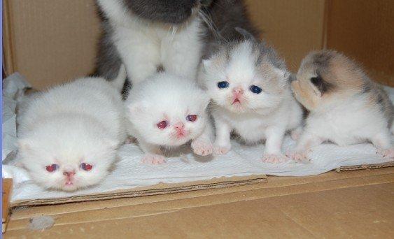 超萌的加菲宝宝,有新的小宝宝了 新照持续上传```