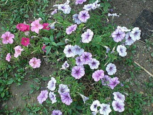 我的阳台,我的花花 很久没有来这里了,赶着织围脖了2012 5 更新
