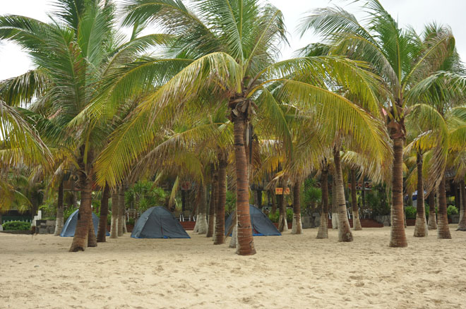 海岛特色——椰子树,可以在这露营呢!o(∩_∩)o~好想体验下.