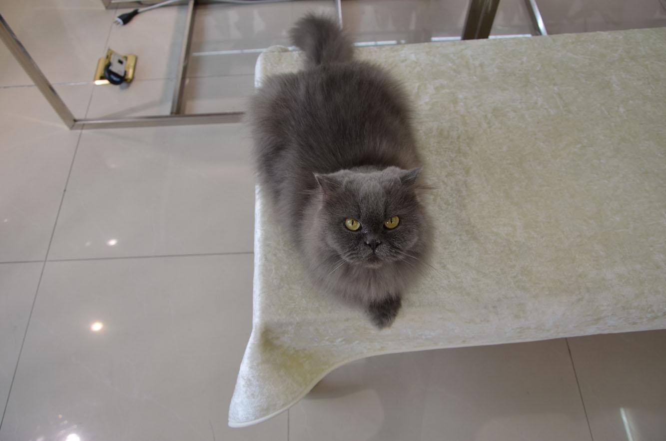壁纸 动物 狗 狗狗 猫 猫咪 小猫 桌面 1333_883