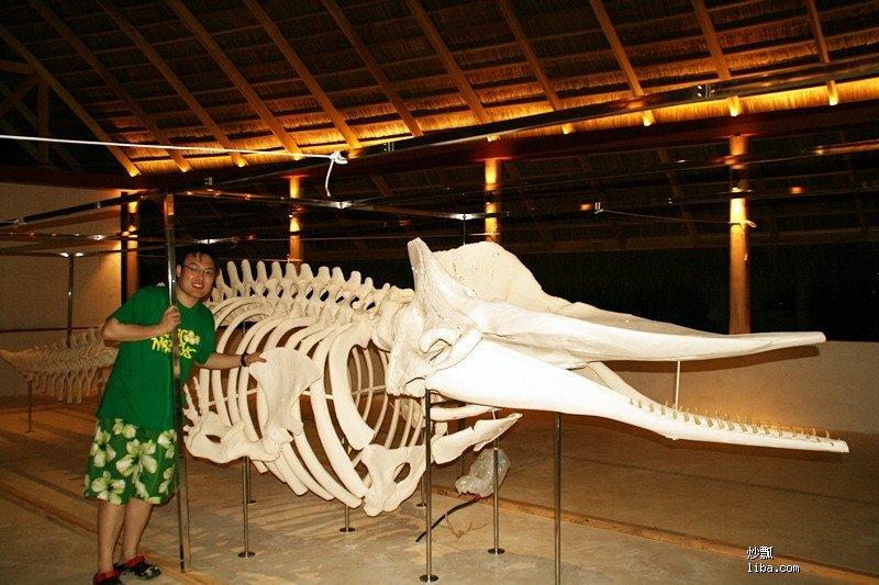 一具座头鲸的骨架