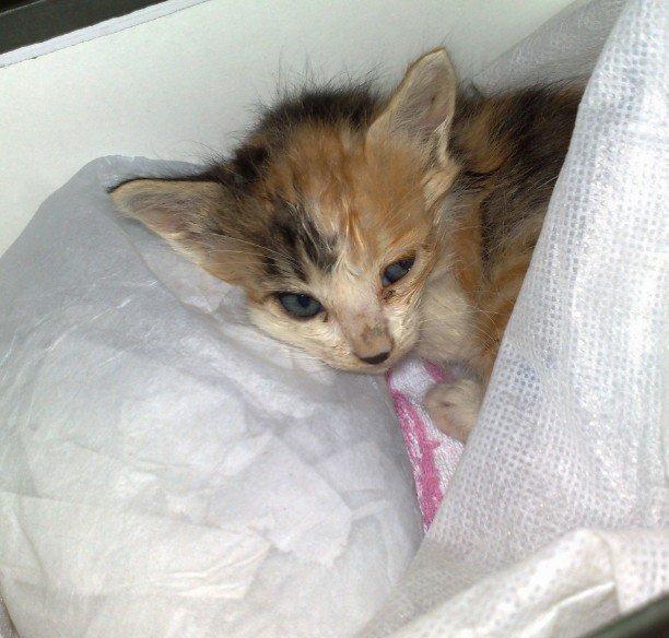 刚 在雨中 救了只小猫 可怜啊 最新 老猫来把小