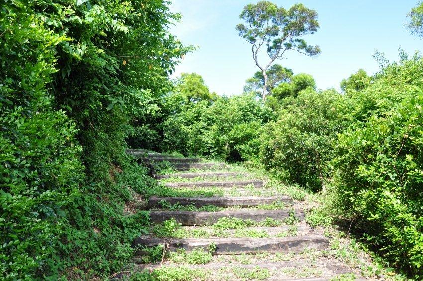 枕木铺设的步道非常适合散步,两旁的绿树郁郁葱葱,生机盎然.