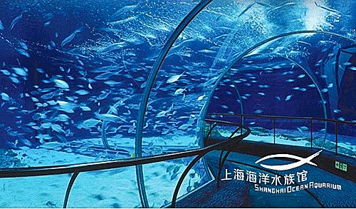 特价上海景点票:长风海洋世界/杜莎蜡像馆/环球金融/海洋水族馆/欢乐