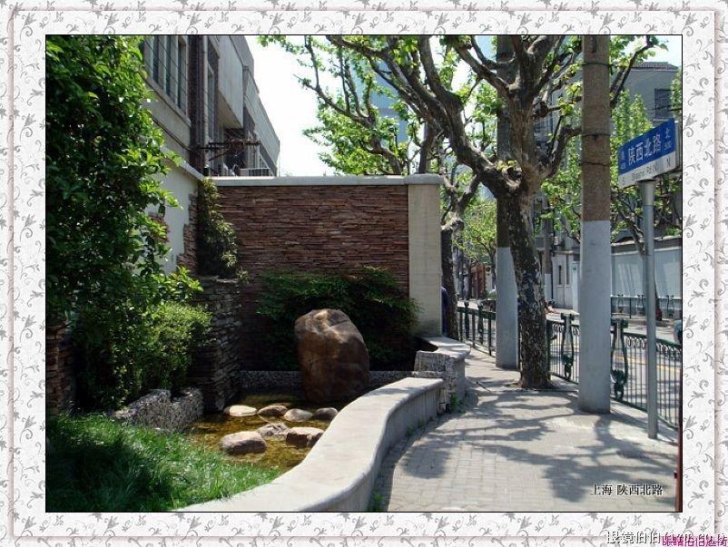 苏州梧桐树文化