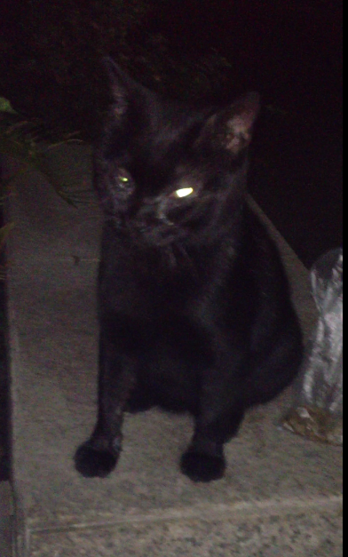 qq头像咪黑猫可爱