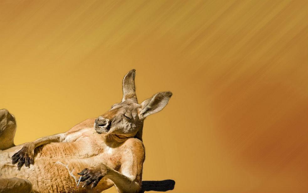 澳洲动物有哪些