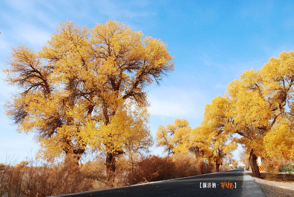只看楼主 收藏 回复  胡杨树冠造型,树叶色泽,树身线条都美丽多姿.