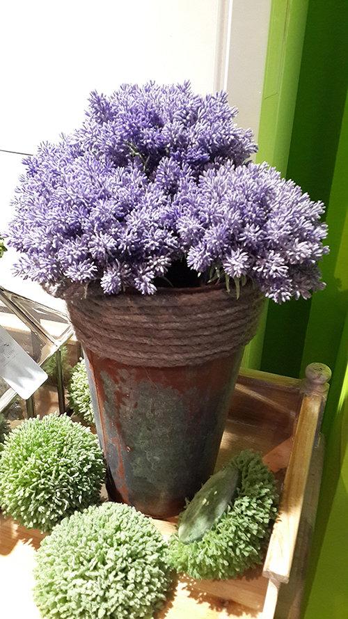 北欧植物ins素材竖版