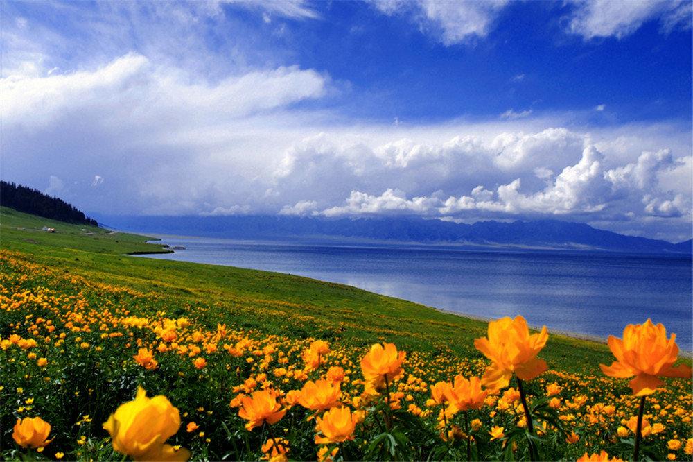 【七八月暑期结伴新疆】高歌在薰衣草海洋,追逐于天山牧场