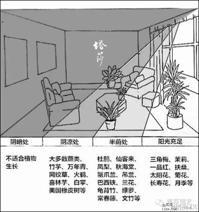 2016-09-02 室内植物.jpg